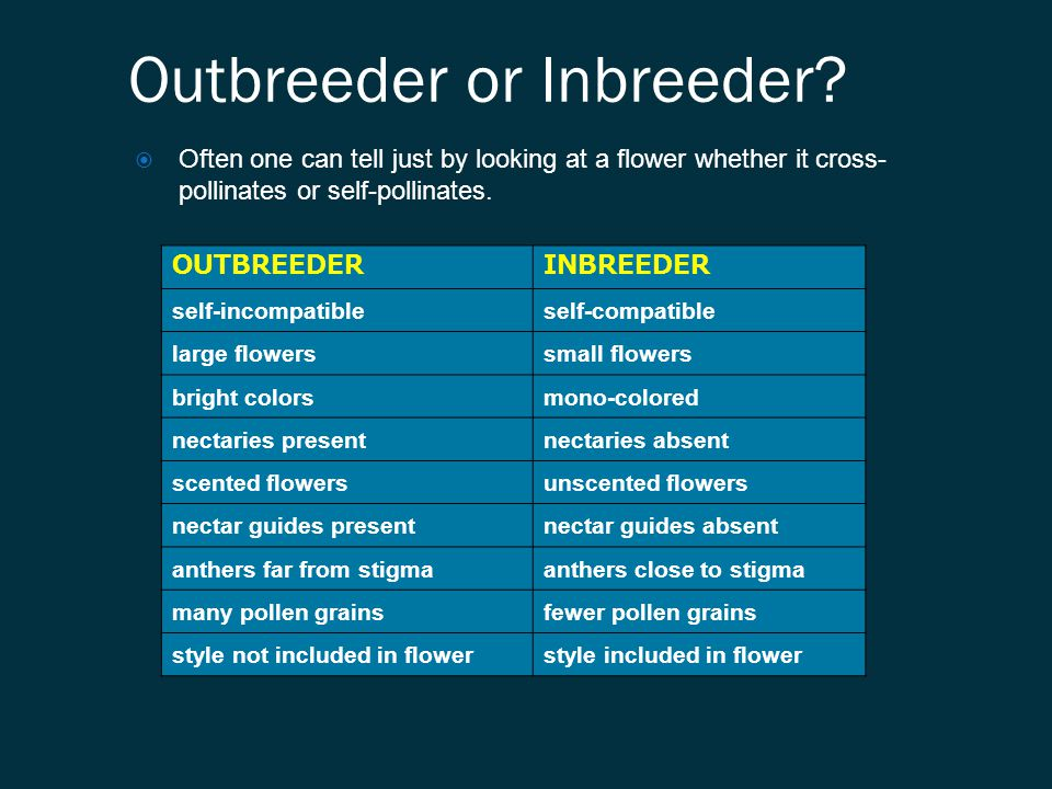 Outbreeder or Inbreeder?  Often one can tell just by looking at a flower whether it cross- pollinates or self-pollinates. OUTBREEDERINBREEDER self-in