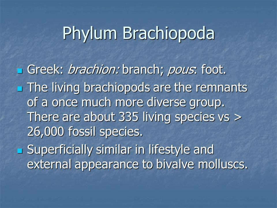 Phylum Brachiopoda Greek: brachion: branch; pous: foot. Greek: brachion: branch; pous: foot. The living brachiopods are the remnants of a once much mo