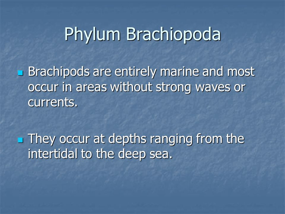 Phylum Brachiopoda Brachipods are entirely marine and most occur in areas without strong waves or currents. Brachipods are entirely marine and most oc