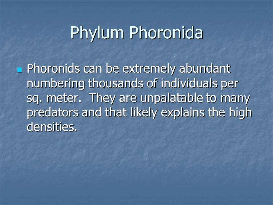 Phylum Phoronida Phoronids can be extremely abundant numbering thousands of individuals per sq. meter. They are unpalatable to many predators and that
