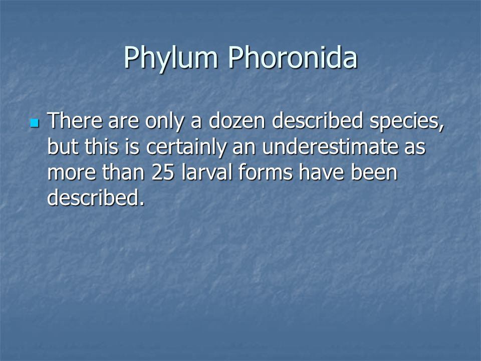 Phylum Phoronida There are only a dozen described species, but this is certainly an underestimate as more than 25 larval forms have been described. Th