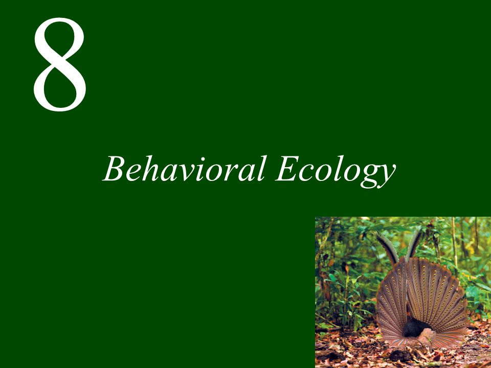 Chapter 8 Behavioral Ecology CONCEPT 8.1 An evolutionary approach to the study of behavior leads to testable predictions.