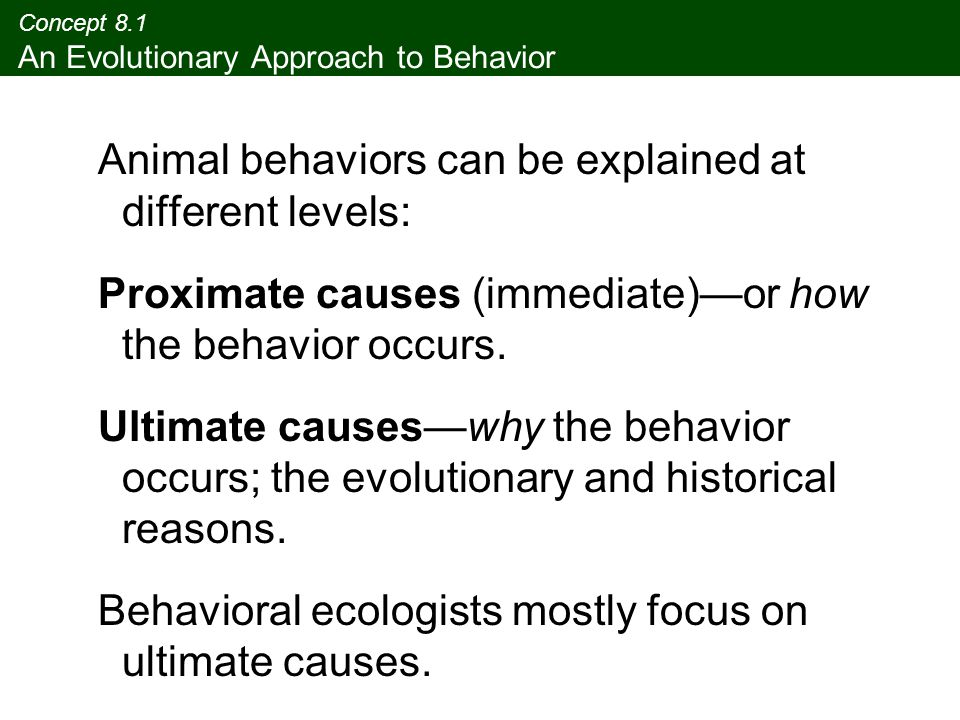 Concept 8.1 An Evolutionary Approach to Behavior Animal behaviors can be explained at different levels: Proximate causes (immediate)—or how the behavi