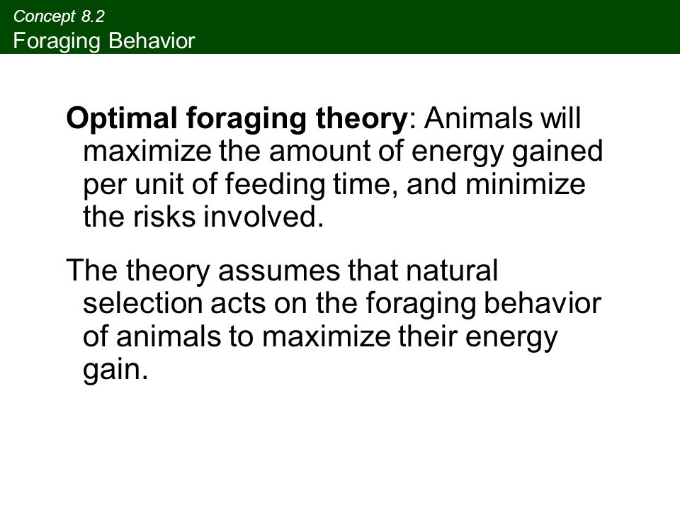 Concept 8.2 Foraging Behavior Optimal foraging theory: Animals will maximize the amount of energy gained per unit of feeding time, and minimize the ri