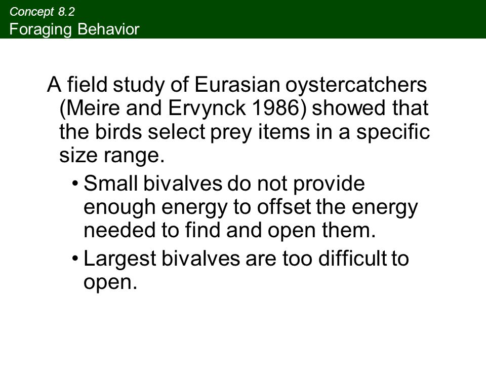 Concept 8.2 Foraging Behavior A field study of Eurasian oystercatchers (Meire and Ervynck 1986) showed that the birds select prey items in a specific