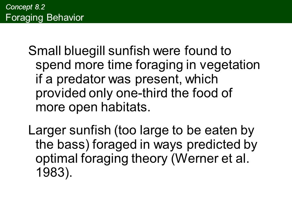 Concept 8.2 Foraging Behavior Small bluegill sunfish were found to spend more time foraging in vegetation if a predator was present, which provided on