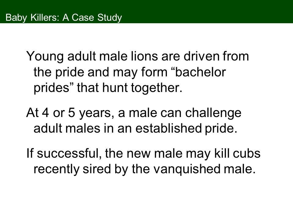 Baby Killers: A Case Study A female lion will become sexually receptive soon after her cubs are killed, as opposed to 2 years if she has cubs.