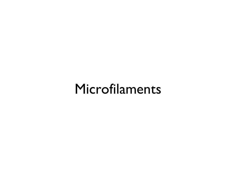 Microfilaments