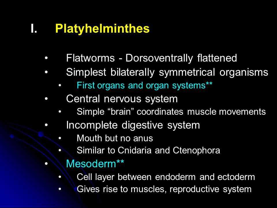 I. I.Platyhelminthes Flatworms - Dorsoventrally flattened Simplest bilaterally symmetrical organisms First organs and organ systems** Central nervous