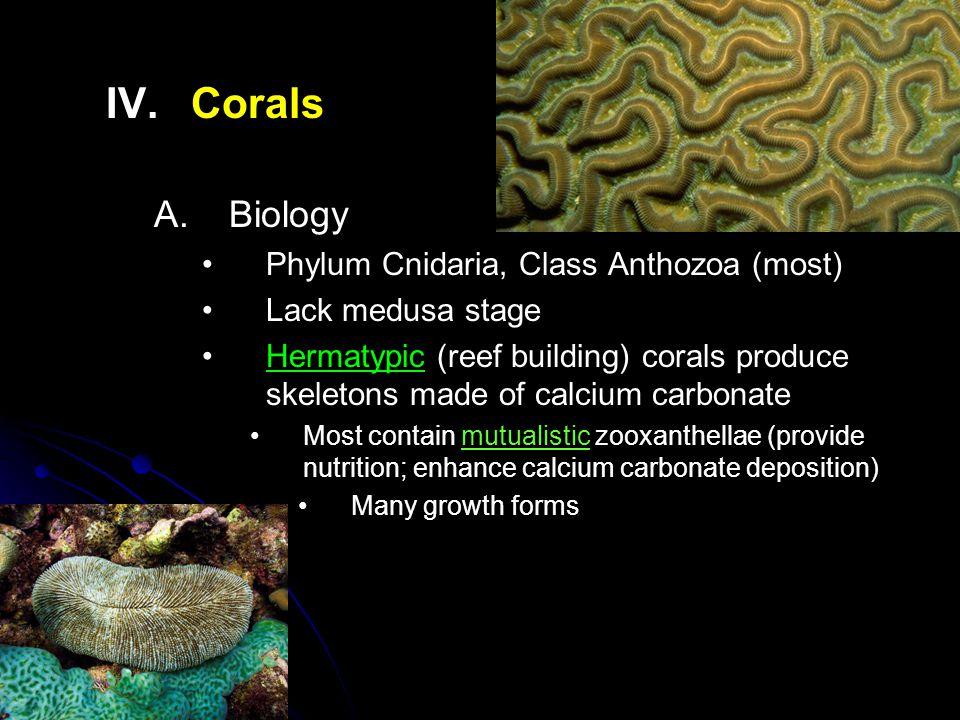 IV. IV.Corals A.