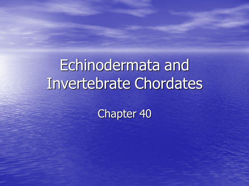 Echinodermata and Invertebrate Chordates Chapter 40