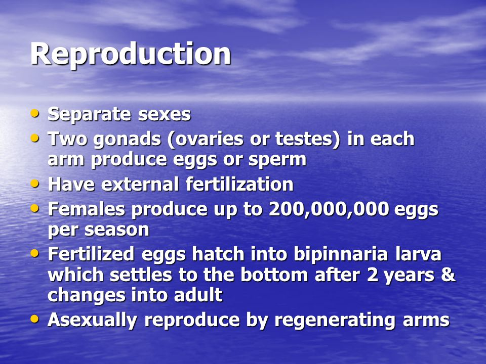 Reproduction Separate sexes Separate sexes Two gonads (ovaries or testes) in each arm produce eggs or sperm Two gonads (ovaries or testes) in each arm
