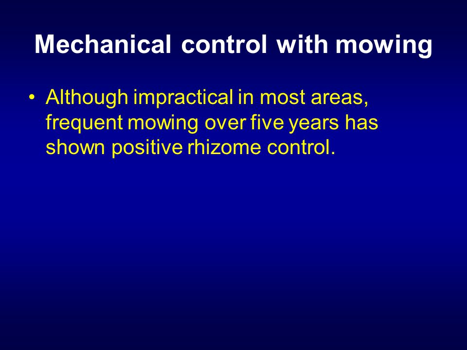 Mechanical control with mowing Although impractical in most areas, frequent mowing over five years has shown positive rhizome control.