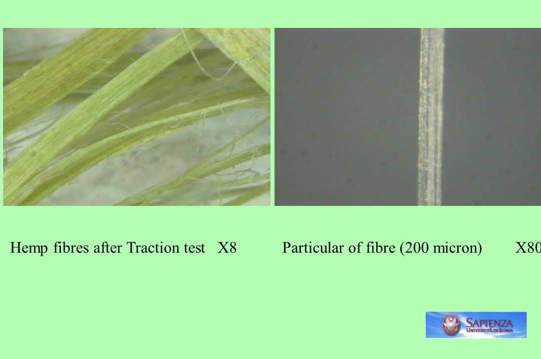 Hemp fibres after Traction test X8Particular of fibre (200 micron) X80