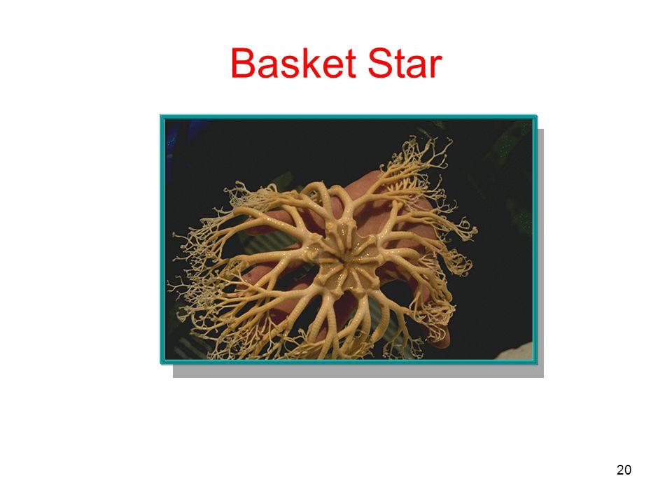 20 Basket Star