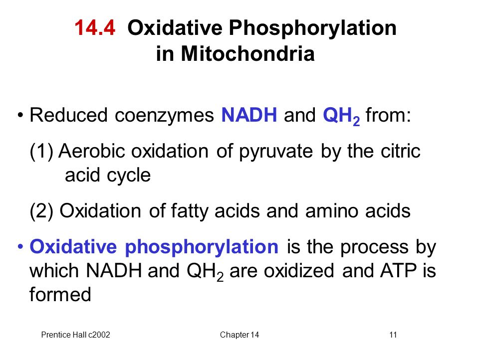 Prentice Hall c2002Chapter 1411 14.4 Oxidative Phosphorylation in Mitochondria Reduced coenzymes NADH and QH 2 from: (1) Aerobic oxidation of pyruvate by the citric acid cycle (2) Oxidation of fatty acids and amino acids Oxidative phosphorylation is the process by which NADH and QH 2 are oxidized and ATP is formed