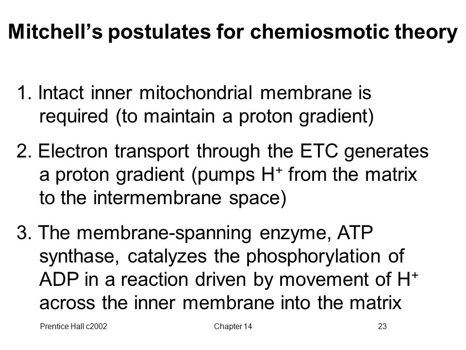 Prentice Hall c2002Chapter 1423 Mitchell's postulates for chemiosmotic theory 1.