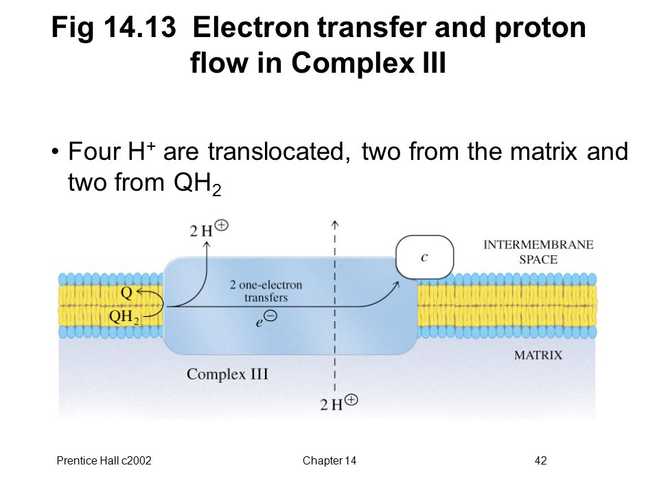Prentice Hall c2002Chapter 1442 Fig 14.13 Electron transfer and proton flow in Complex III Four H + are translocated, two from the matrix and two from QH 2