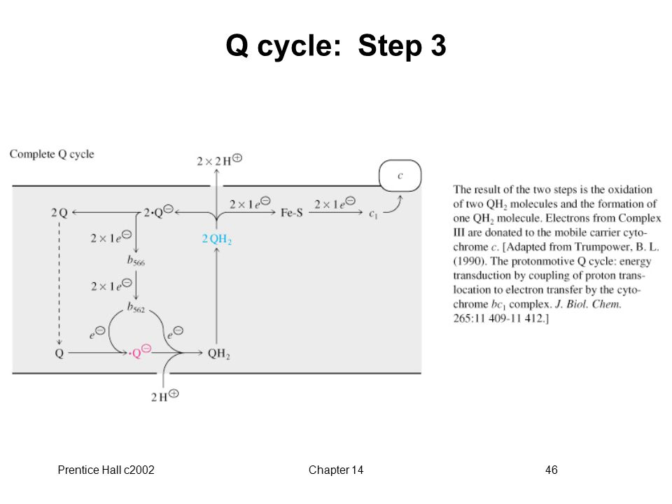 Prentice Hall c2002Chapter 1446 Q cycle: Step 3