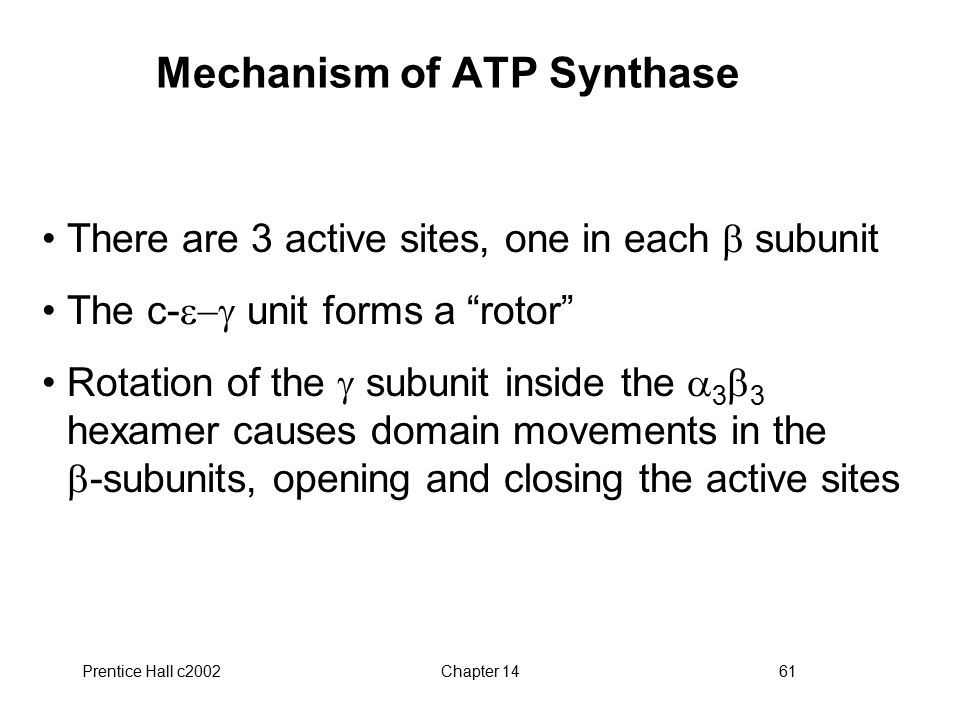 Prentice Hall c2002Chapter 1461 Mechanism of ATP Synthase There are 3 active sites, one in each  subunit The c-  unit forms a rotor Rotation of the  subunit inside the  3  3 hexamer causes domain movements in the  -subunits, opening and closing the active sites