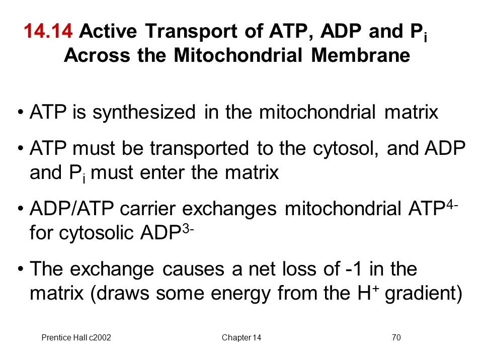 Prentice Hall c2002Chapter 1470 14.14 Active Transport of ATP, ADP and P i Across the Mitochondrial Membrane ATP is synthesized in the mitochondrial matrix ATP must be transported to the cytosol, and ADP and P i must enter the matrix ADP/ATP carrier exchanges mitochondrial ATP 4- for cytosolic ADP 3- The exchange causes a net loss of -1 in the matrix (draws some energy from the H + gradient)