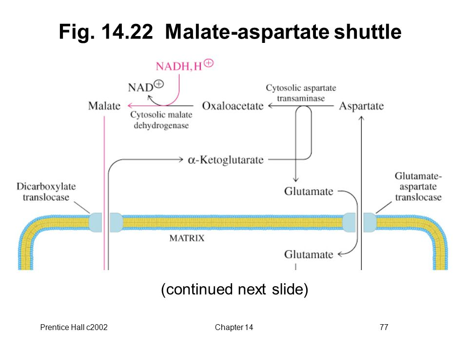 Prentice Hall c2002Chapter 1477 Fig. 14.22 Malate-aspartate shuttle (continued next slide)