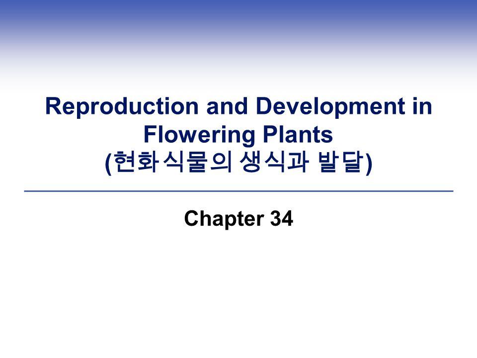 Reproduction and Development in Flowering Plants ( 현화식물의 생식과 발달 ) Chapter 34