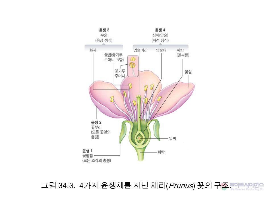 그림 34.3. 4 가지 윤생체를 지닌 체리 (Prunus) 꽃의 구조.