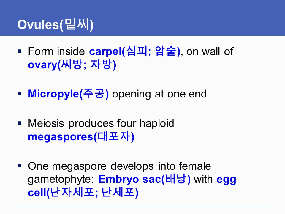 Ovules( 밑씨 )  Form inside carpel( 심피 ; 암술 ), on wall of ovary( 씨방 ; 자방 )  Micropyle( 주공 ) opening at one end  Meiosis produces four haploid megaspo