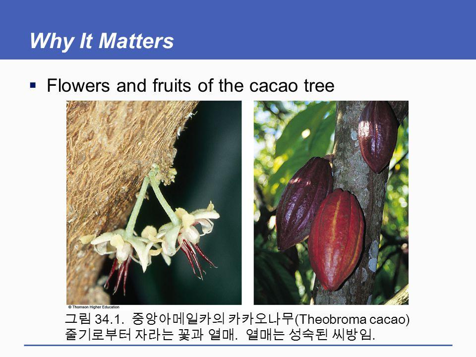 Why It Matters  Flowers and fruits of the cacao tree 그림 34.1. 중앙아메일카의 카카오나무 (Theobroma cacao) 줄기로부터 자라는 꽃과 열매. 열매는 성숙된 씨방임.