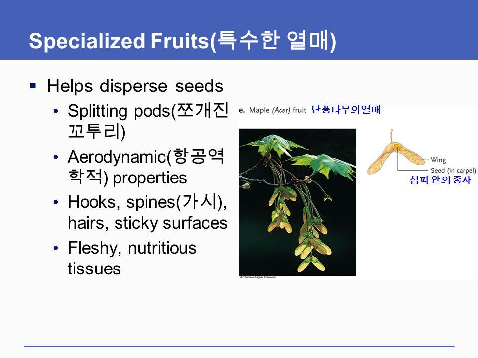 Specialized Fruits( 특수한 열매 )  Helps disperse seeds Splitting pods( 쪼개진 꼬투리 ) Aerodynamic( 항공역 학적 ) properties Hooks, spines( 가시 ), hairs, sticky surf