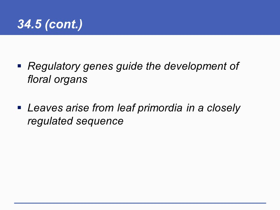 34.5 (cont.)  Regulatory genes guide the development of floral organs  Leaves arise from leaf primordia in a closely regulated sequence