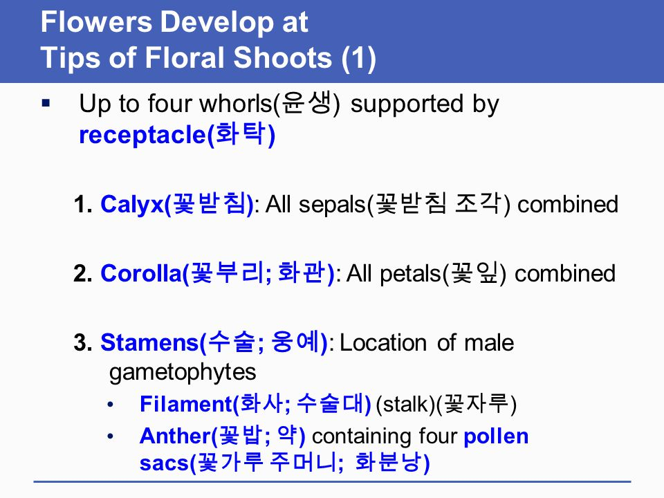 Flowers Develop at Tips of Floral Shoots (1)  Up to four whorls( 윤생 ) supported by receptacle( 화탁 ) 1. Calyx( 꽃받침 ): All sepals( 꽃받침 조각 ) combined 2.