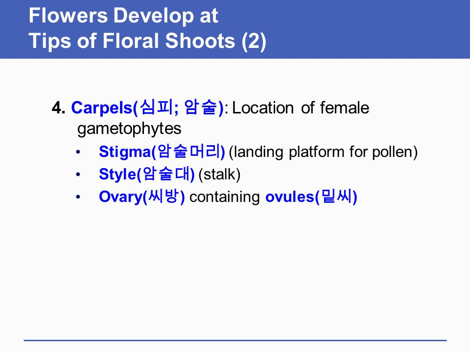 Flowers Develop at Tips of Floral Shoots (2) 4. Carpels( 심피 ; 암술 ): Location of female gametophytes Stigma( 암술머리 ) (landing platform for pollen) Style