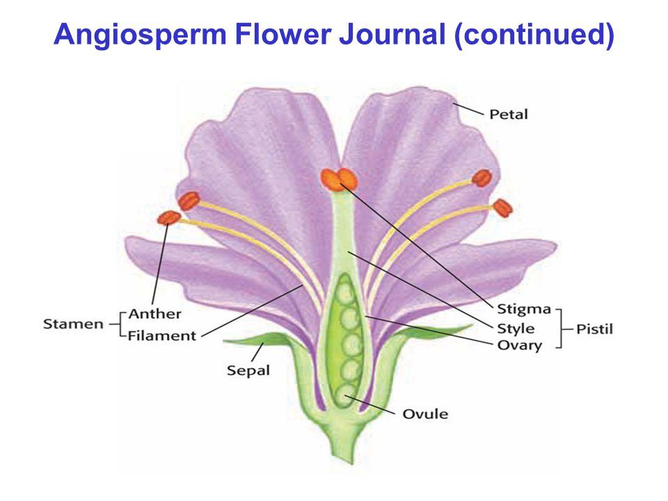 Angiosperm Flower Journal (continued)