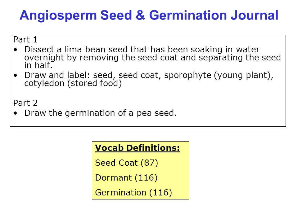 Angiosperm Seed & Germination Journal Part 1 Dissect a lima bean seed that has been soaking in water overnight by removing the seed coat and separatin