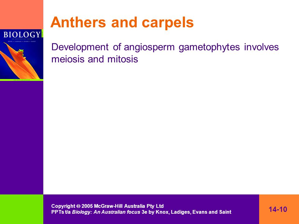 14-10 Copyright  2005 McGraw-Hill Australia Pty Ltd PPTs t/a Biology: An Australian focus 3e by Knox, Ladiges, Evans and Saint Anthers and carpels Development of angiosperm gametophytes involves meiosis and mitosis