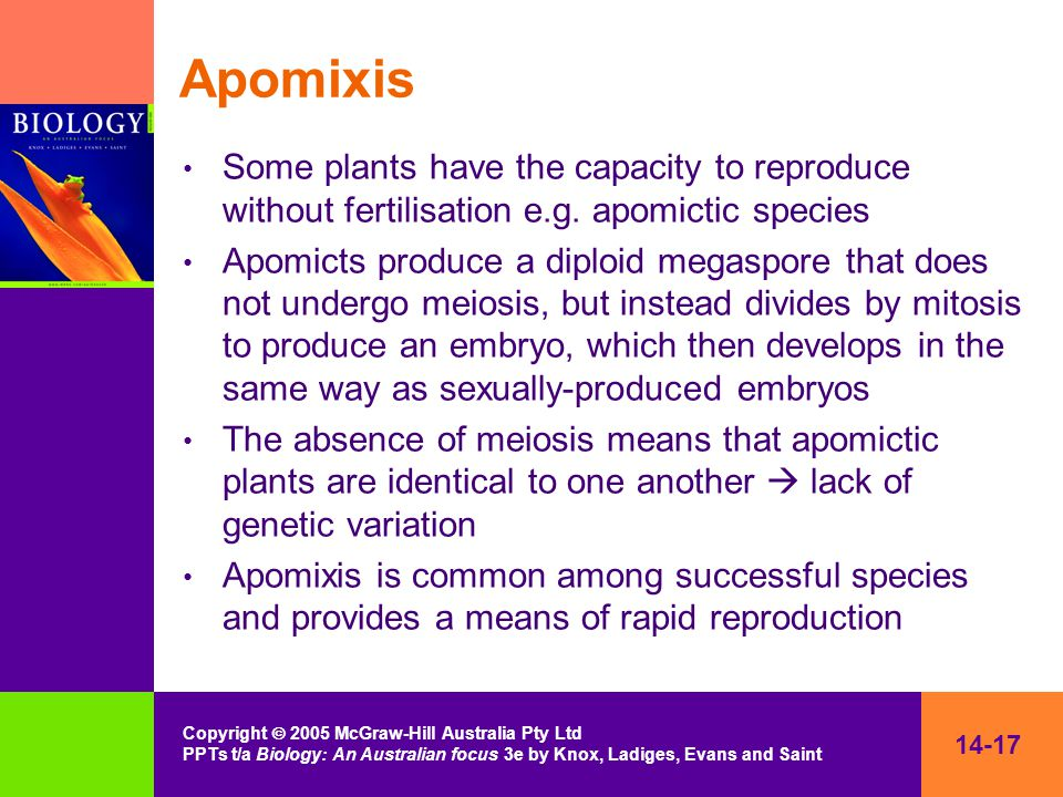 14-17 Copyright  2005 McGraw-Hill Australia Pty Ltd PPTs t/a Biology: An Australian focus 3e by Knox, Ladiges, Evans and Saint Apomixis Some plants have the capacity to reproduce without fertilisation e.g.