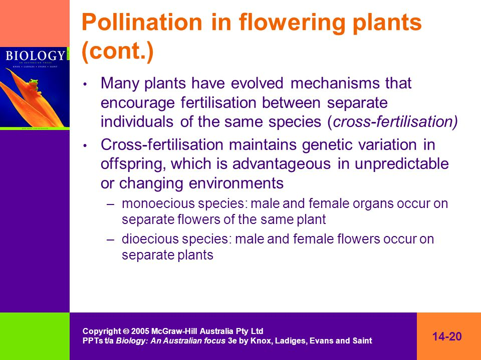 14-20 Copyright  2005 McGraw-Hill Australia Pty Ltd PPTs t/a Biology: An Australian focus 3e by Knox, Ladiges, Evans and Saint Pollination in flowering plants (cont.) Many plants have evolved mechanisms that encourage fertilisation between separate individuals of the same species (cross-fertilisation) Cross-fertilisation maintains genetic variation in offspring, which is advantageous in unpredictable or changing environments –monoecious species: male and female organs occur on separate flowers of the same plant –dioecious species: male and female flowers occur on separate plants