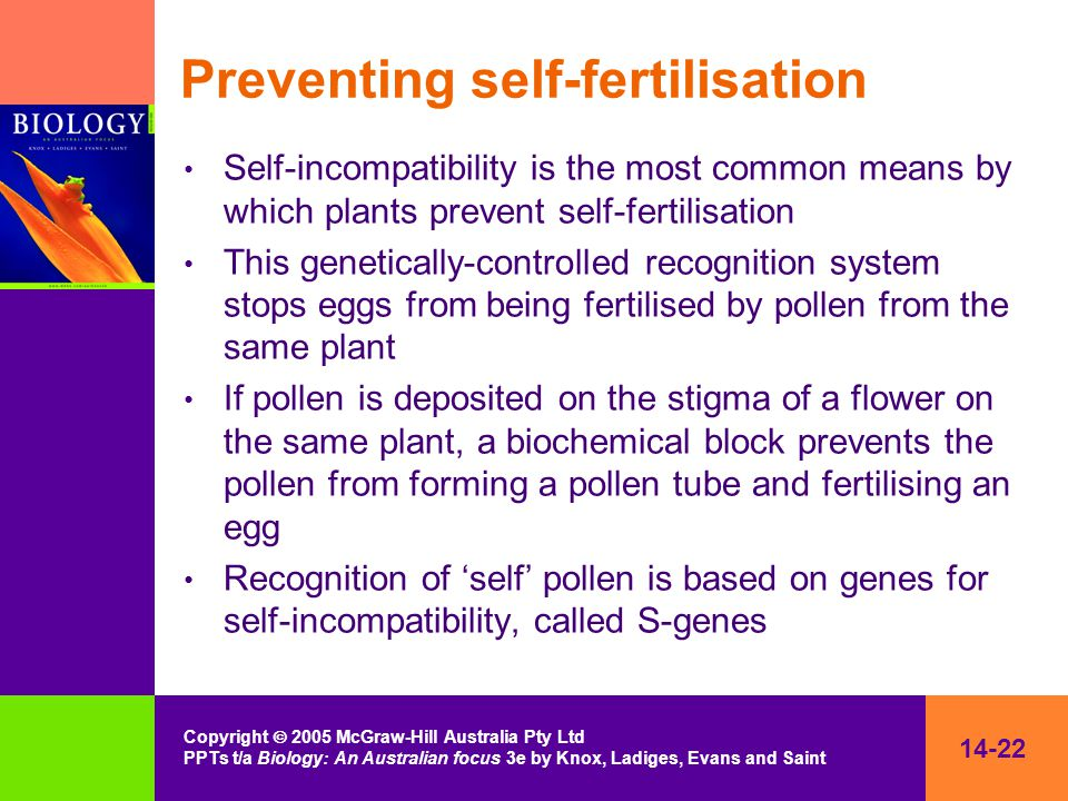 14-22 Copyright  2005 McGraw-Hill Australia Pty Ltd PPTs t/a Biology: An Australian focus 3e by Knox, Ladiges, Evans and Saint Preventing self-fertil