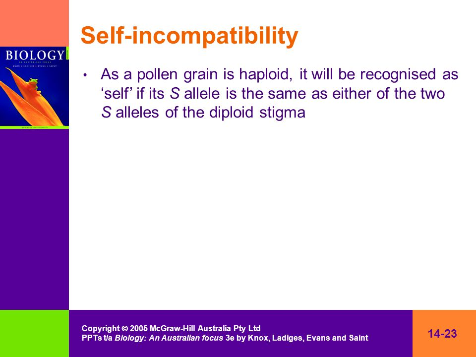14-23 Copyright  2005 McGraw-Hill Australia Pty Ltd PPTs t/a Biology: An Australian focus 3e by Knox, Ladiges, Evans and Saint Self-incompatibility As a pollen grain is haploid, it will be recognised as 'self' if its S allele is the same as either of the two S alleles of the diploid stigma