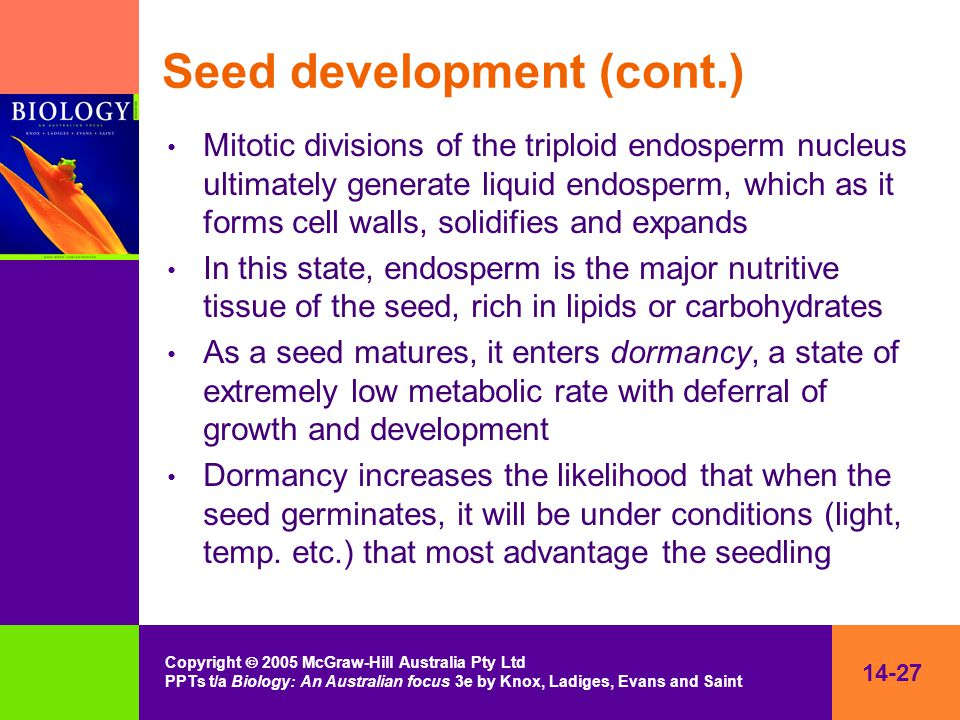 14-27 Copyright  2005 McGraw-Hill Australia Pty Ltd PPTs t/a Biology: An Australian focus 3e by Knox, Ladiges, Evans and Saint Seed development (cont.) Mitotic divisions of the triploid endosperm nucleus ultimately generate liquid endosperm, which as it forms cell walls, solidifies and expands In this state, endosperm is the major nutritive tissue of the seed, rich in lipids or carbohydrates As a seed matures, it enters dormancy, a state of extremely low metabolic rate with deferral of growth and development Dormancy increases the likelihood that when the seed germinates, it will be under conditions (light, temp.