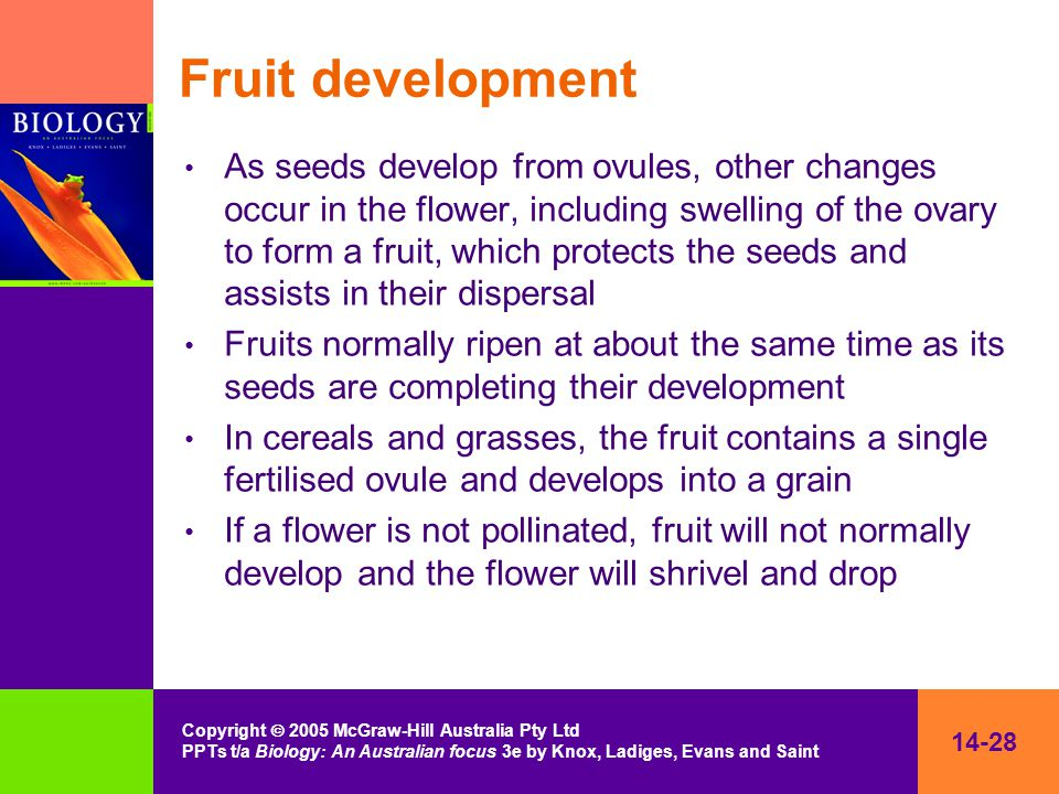 14-28 Copyright  2005 McGraw-Hill Australia Pty Ltd PPTs t/a Biology: An Australian focus 3e by Knox, Ladiges, Evans and Saint Fruit development As s