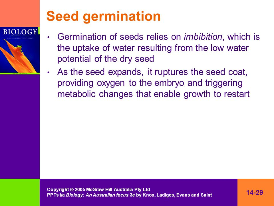 14-29 Copyright  2005 McGraw-Hill Australia Pty Ltd PPTs t/a Biology: An Australian focus 3e by Knox, Ladiges, Evans and Saint Seed germination Germi