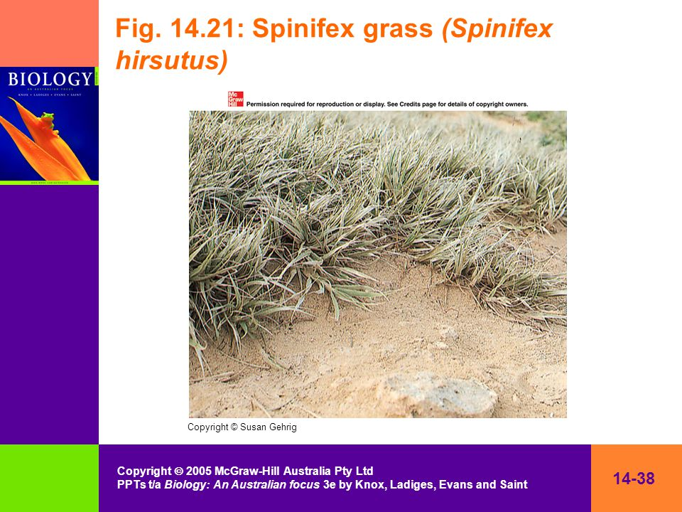14-38 Copyright  2005 McGraw-Hill Australia Pty Ltd PPTs t/a Biology: An Australian focus 3e by Knox, Ladiges, Evans and Saint Fig.