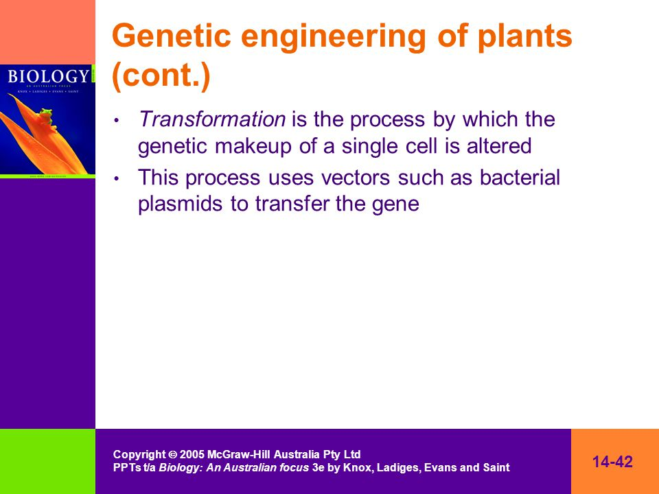 14-42 Copyright  2005 McGraw-Hill Australia Pty Ltd PPTs t/a Biology: An Australian focus 3e by Knox, Ladiges, Evans and Saint Genetic engineering of plants (cont.) Transformation is the process by which the genetic makeup of a single cell is altered This process uses vectors such as bacterial plasmids to transfer the gene
