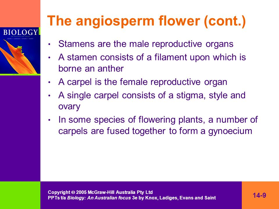 14-9 Copyright  2005 McGraw-Hill Australia Pty Ltd PPTs t/a Biology: An Australian focus 3e by Knox, Ladiges, Evans and Saint The angiosperm flower (cont.) Stamens are the male reproductive organs A stamen consists of a filament upon which is borne an anther A carpel is the female reproductive organ A single carpel consists of a stigma, style and ovary In some species of flowering plants, a number of carpels are fused together to form a gynoecium