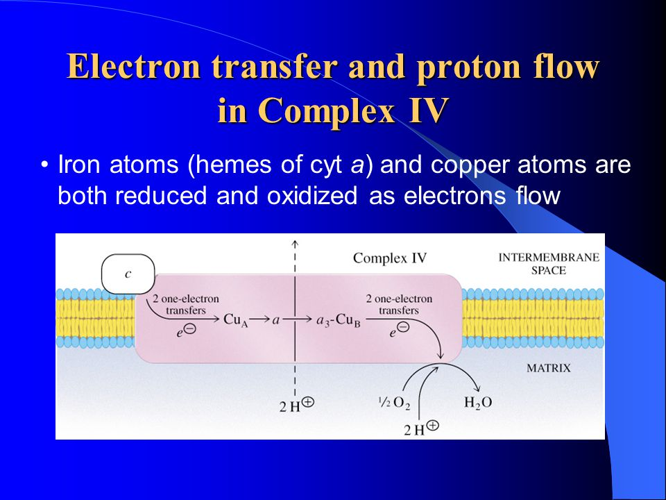 Electron transfer and proton flow in Complex IV Iron atoms (hemes of cyt a) and copper atoms are both reduced and oxidized as electrons flow
