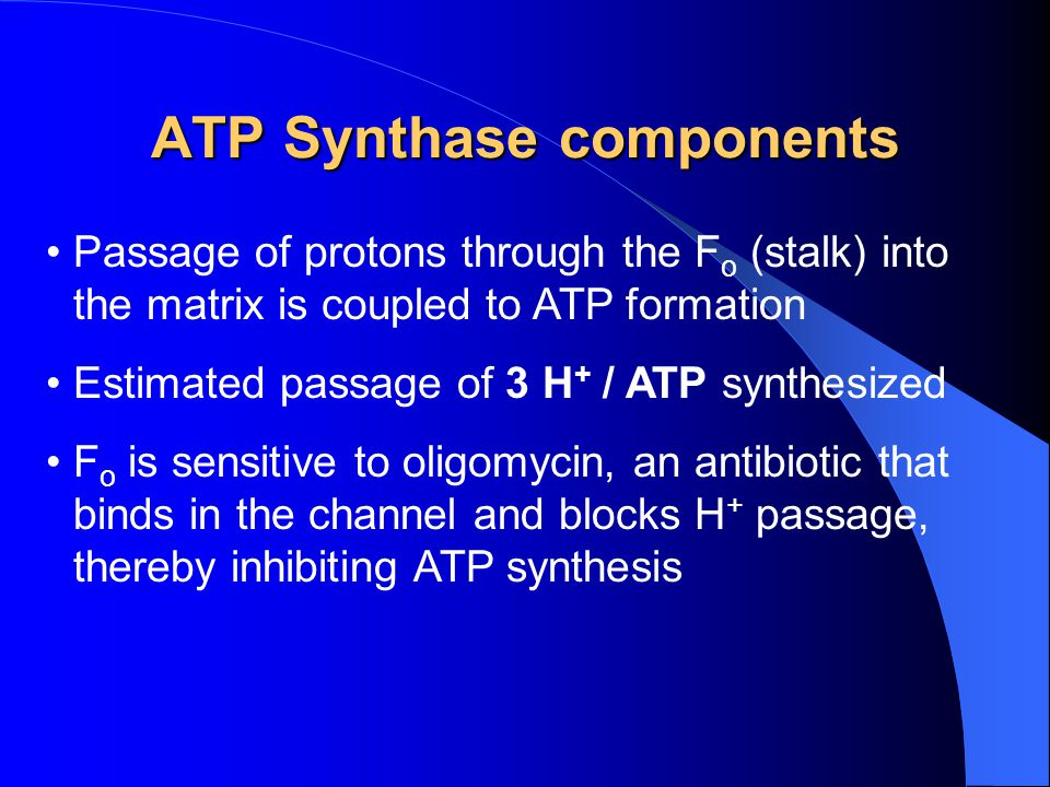 ATP Synthase components Passage of protons through the F o (stalk) into the matrix is coupled to ATP formation Estimated passage of 3 H + / ATP synthe