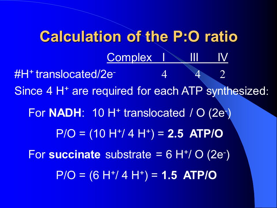 Calculation of the P:O ratio ComplexIIIIIV #H + translocated/2e - 4 4 2 Since 4 H + are required for each ATP synthesized : For NADH: 10 H + transloca